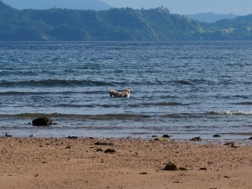 Mimpi Indah Resort dog is on fishing mood