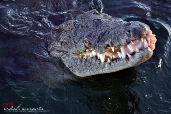 Jardines de la reina thrilling dives with sharks indahs dive travel photography - Jardines de la reina ...