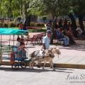 Activity in ParqueVidal