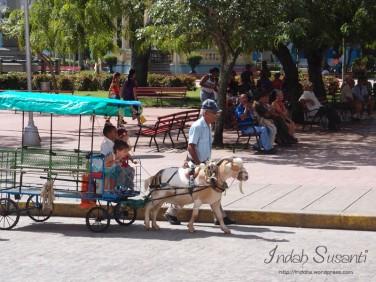 Activity in Parque Vidal