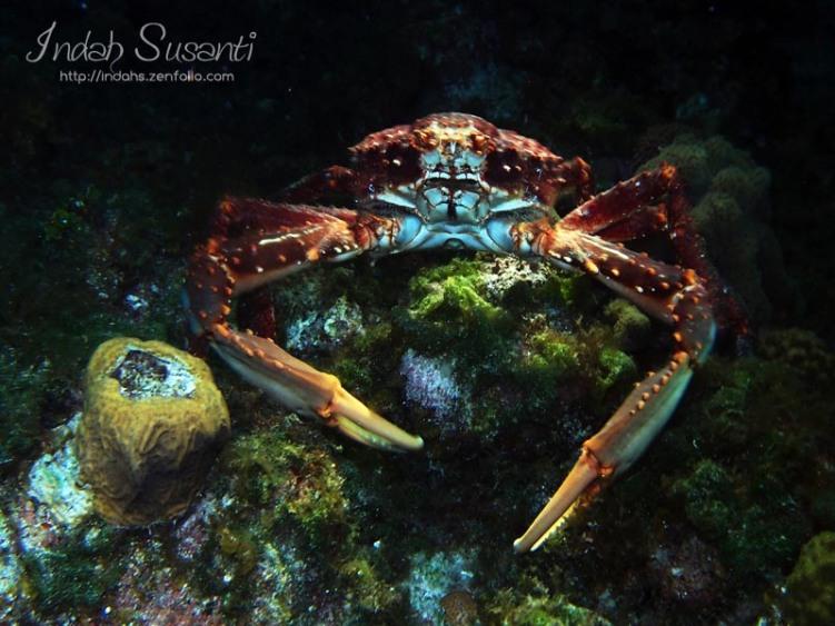 Huge crab
