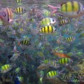 Snorkeling Phi PhiIslands