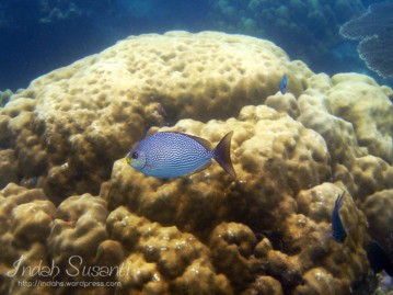 Snorkeling Picture: Face to Face