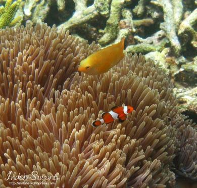 Snorkeling Phi Phi Islands