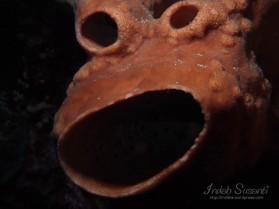 Bunaken Funny Coral