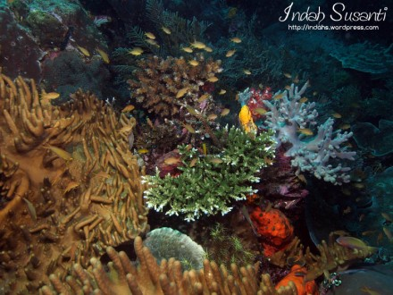 The Colourful Corals