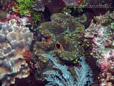 The colorful marine life of Raja Ampat