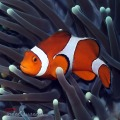 Underwater Photography by IndahSusanti