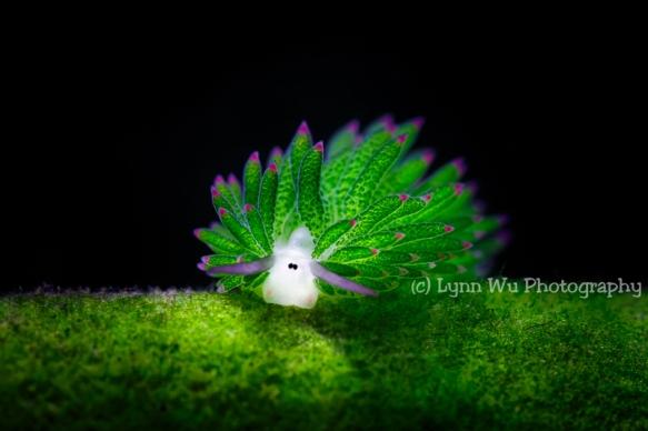 Sheep Eats Grass by Lynn Wu