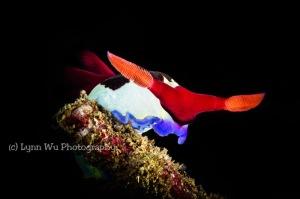 Underwater Photography by Lynn Wu