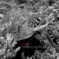 Endangered Marine Species
