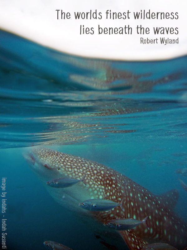 Quote by Robert Wyland