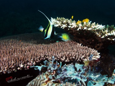 Indonesia Underwater Life