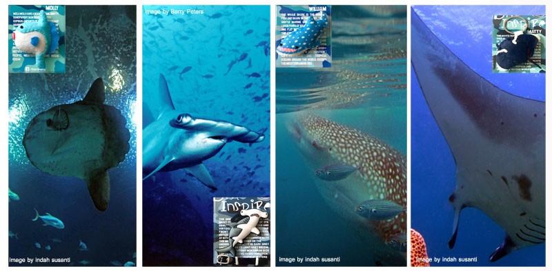The Big Four (+Giveaway from Dive Inspire)