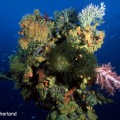 Image by Don Sutherland – Colorfulcorals