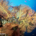Don sutherland 06 – colorfulcorals