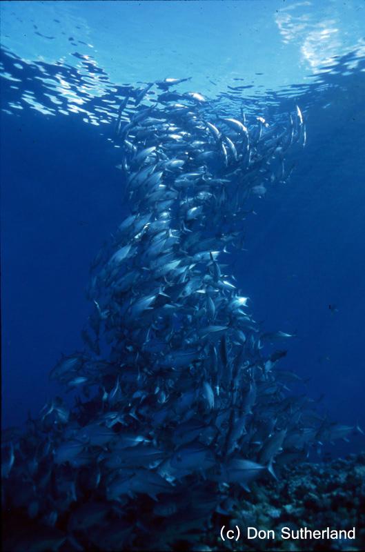 Don sutherland 09 - amazing fish formation