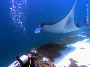 Diving with Mantas in Komodo!