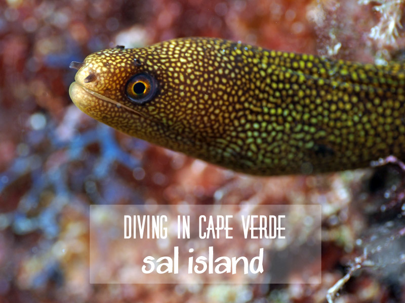 Underwater Photography of Cabo Verde