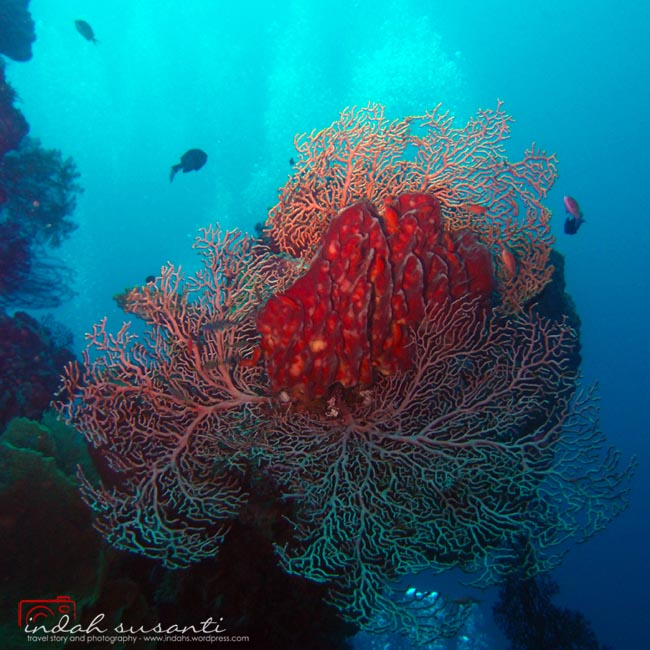 Colorful corals in Bali