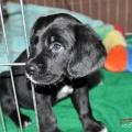 Dante puppy