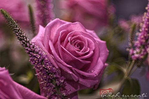 Rose Valentine