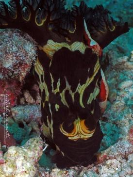 Mr. Nudibranch & the Shrimps