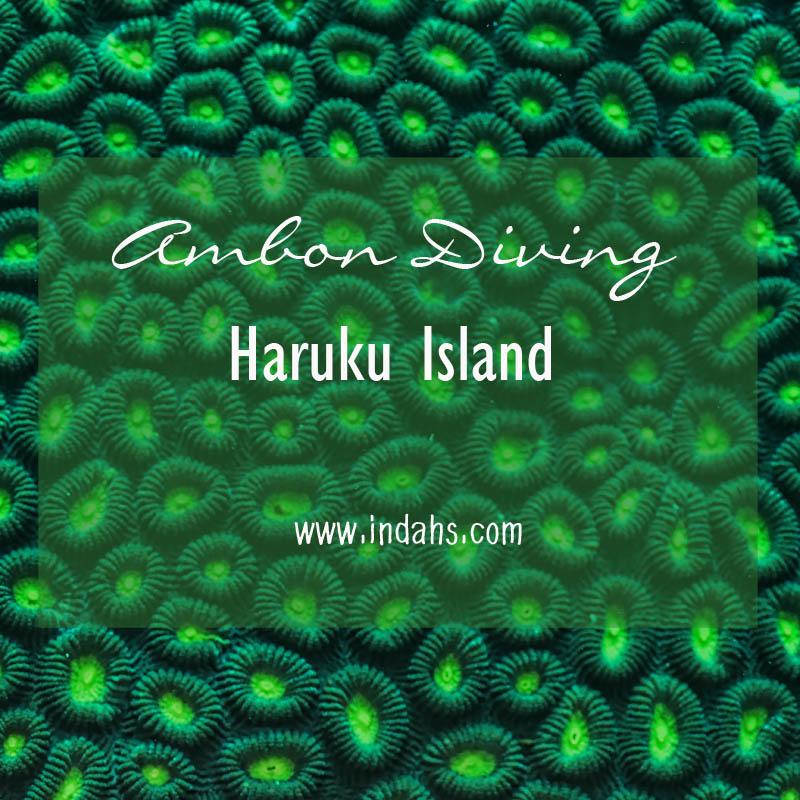 Ambon Diving: Haruku Island