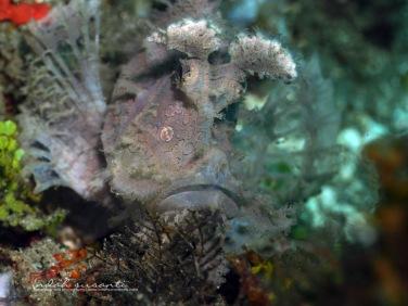 Ambon Bay - Maluku