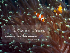 Clownfish by Indah Susanti