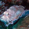 komodo diving indonesia
