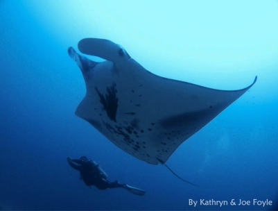 Cocos Island by Kathryn & Joe Foyle 4