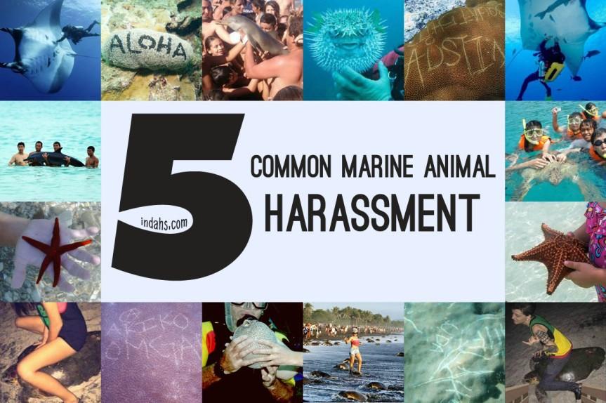 Cover Marine Animal Harassment wordpress