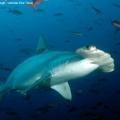 Galapagos – Ultimate DiveTravel