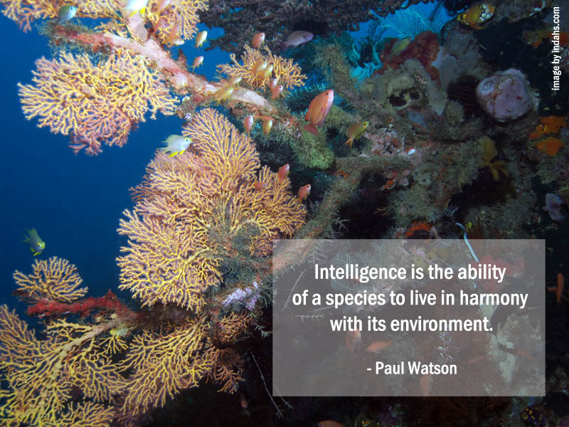 Inspiring Quote to Save Our Seas