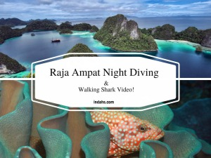 00b-raja-ampat-wordpress