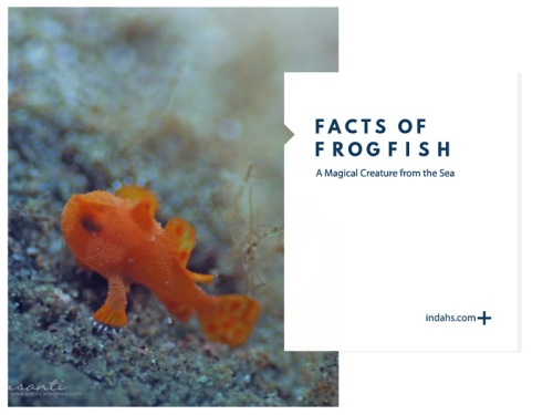frogfish-cover-wordpress