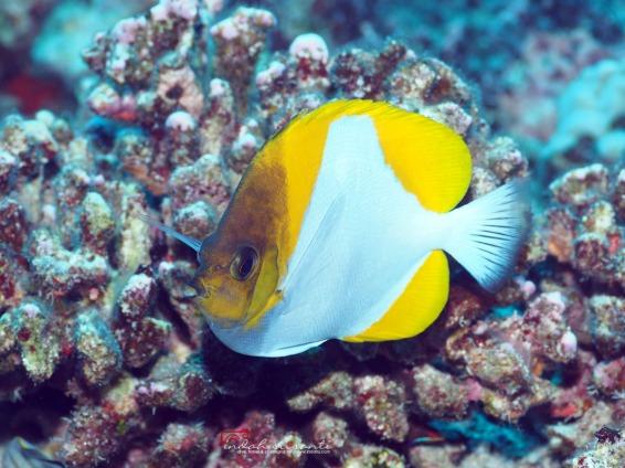 Big Island Hawai'i Underwater Images