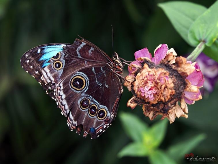 Blooming Butterflies at Como Park