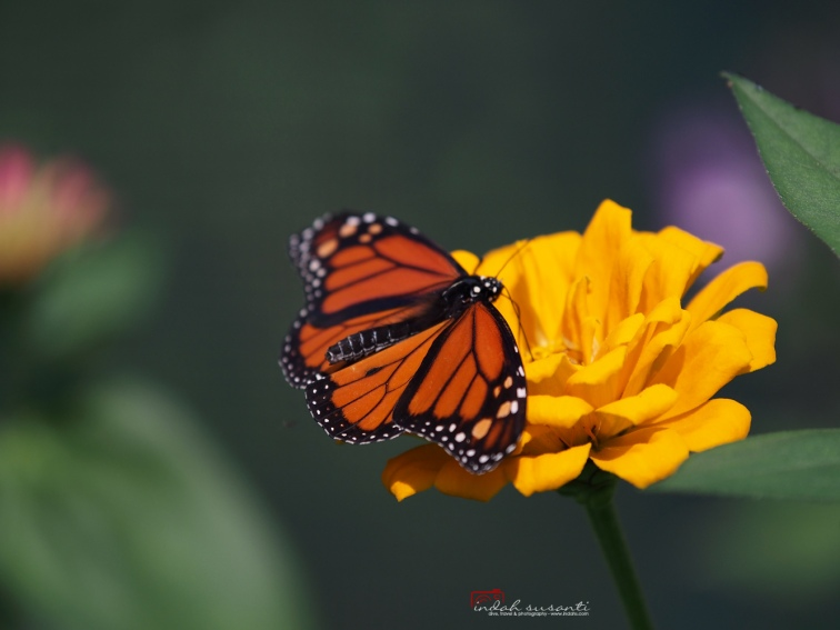 Butterfly Garden at MN Zoo