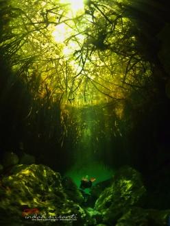 Casa Cenote - Tulum Mexico