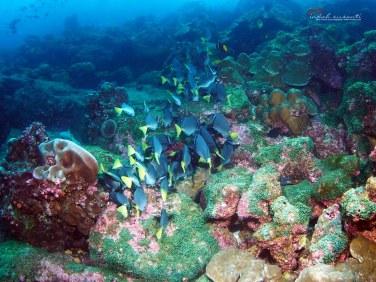 Darwin Diving