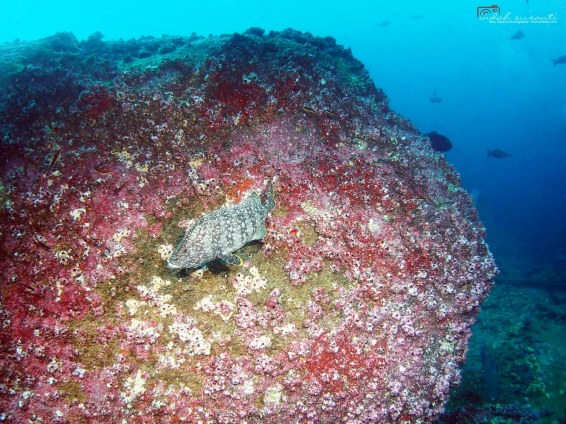 Darwin Arch/Island - Galapagos