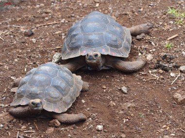 Conservation Center for the Giant Tortoise