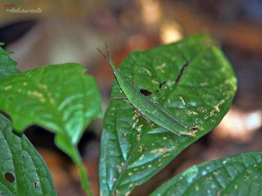 The Insects of Amazon Forest