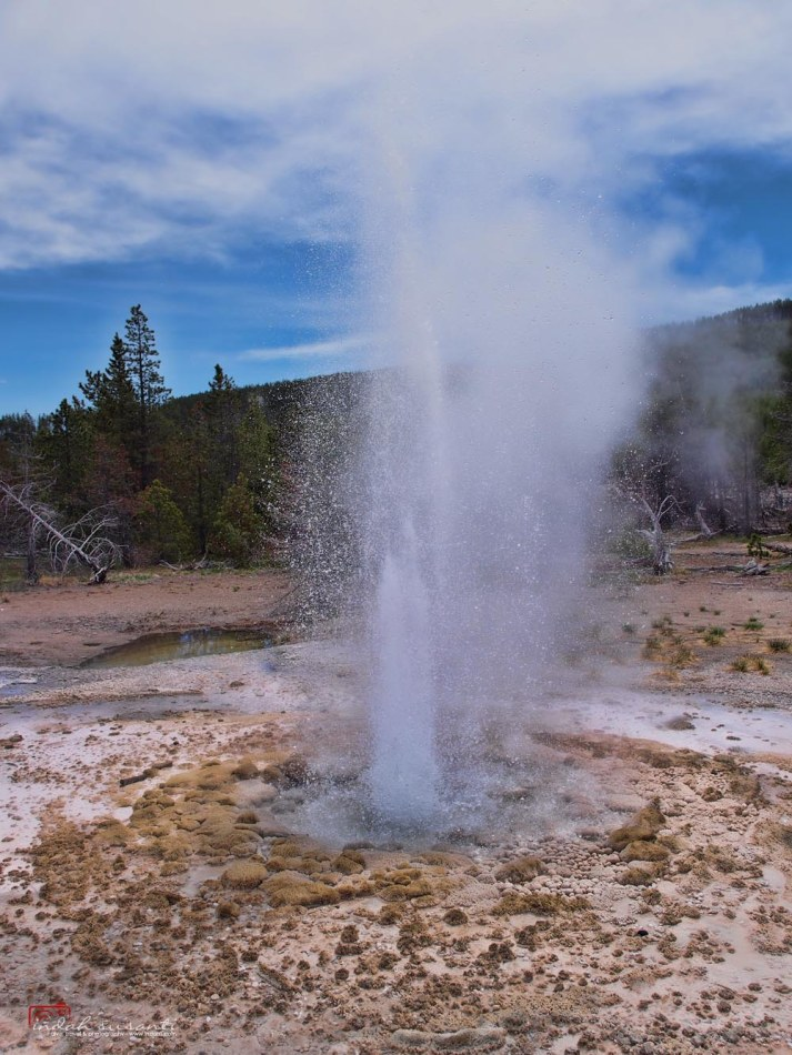 Yellowstone: Norris Geyser Basin