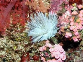 Pescador Island Diving