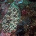 Ambon Underwater